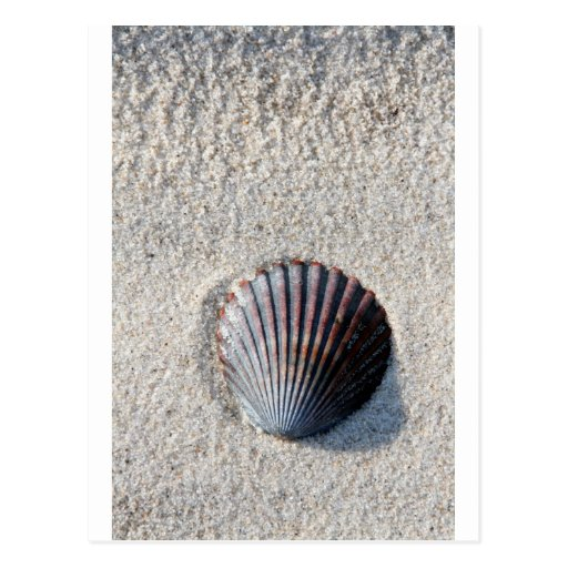 shell in sand postcard
