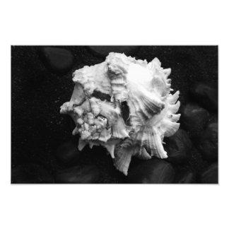 Shell No.1 - Picture - by Carla Pivonski® Photo Print