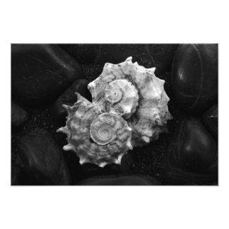 Shell No.3 - Picture - by Carla Pivonski® Photograph