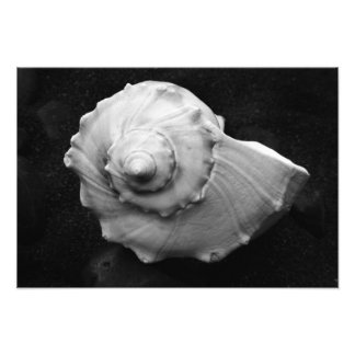 Shell No.6 - Picture - by Carla Pivonski® Art Photo