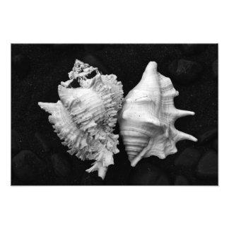 Shell No.7 - Picture - by Carla Pivonski® Photographic Print