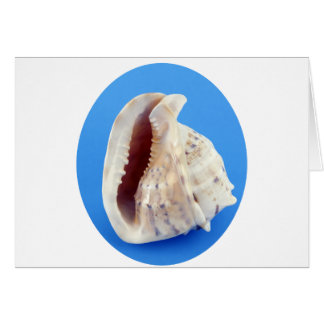 Shell of a Conch on Blue Card