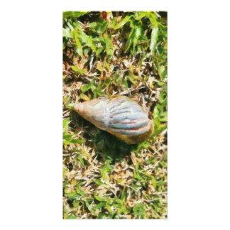 Shell on a beach photo card