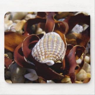 Shell On A Bed Of Seaweed Mouse Pad