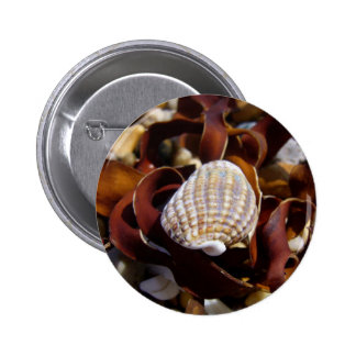 Shell On A Bed Of Seaweed Pinback Button