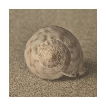 Beach Themed Shell on sand wood print