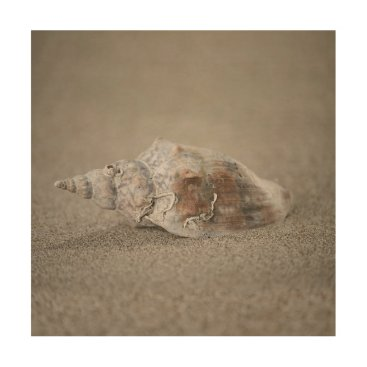 Beach Themed Shell on sand wood wall art