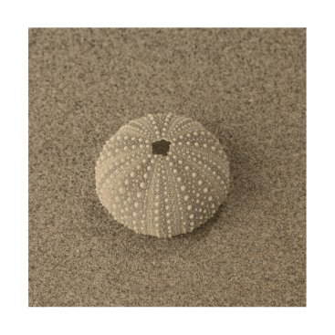 Beach Themed Shell on sand wood wall decor