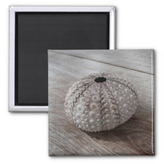 Shell On Top Of A Wooden Table Magnet