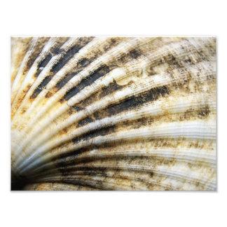 Shell Art Photo