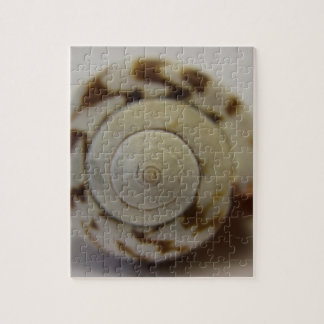 Shell photograph jigsaw puzzle
