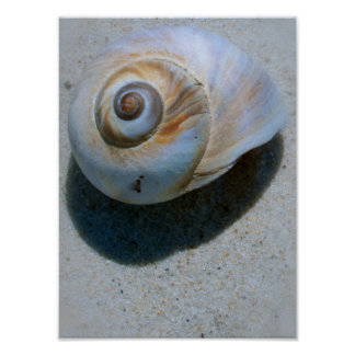 shell poster