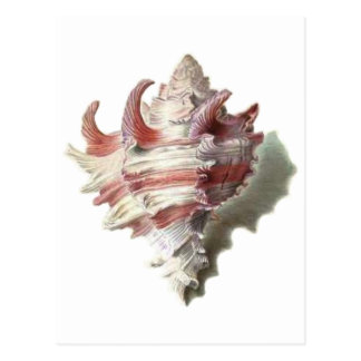 Shell rosado postales