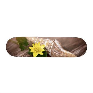 Shell Skate Board Decks