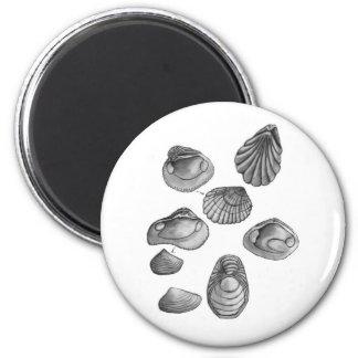 Shell sketch magnet