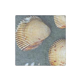 Shell Trio Stone Magnet