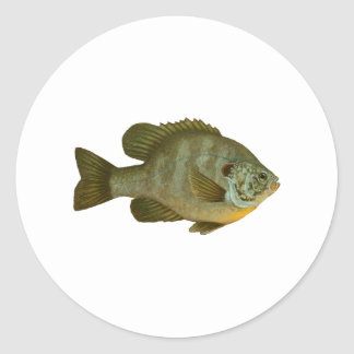Shellcracker Classic Round Sticker