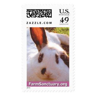 Shelley el conejo sello
