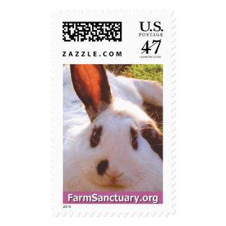 Shelley el conejo sellos