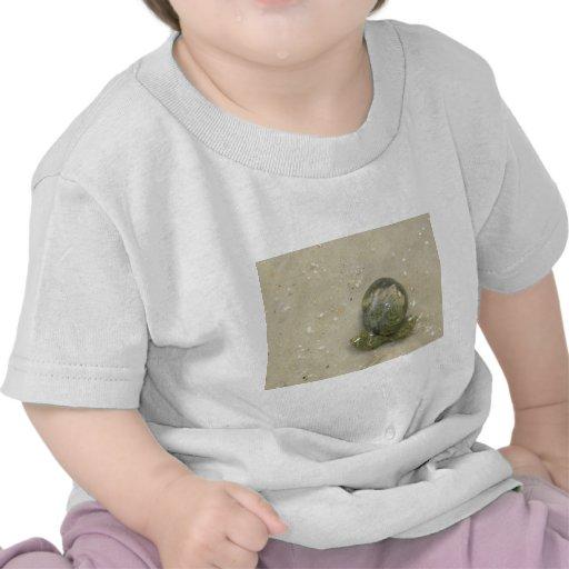 Shellin Camisetas