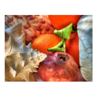 Shells and Fruits still-life Postcard