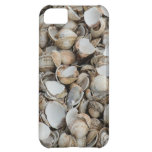 Shells background cover for iPhone 5C