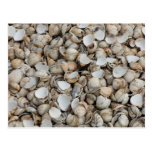 Shells background postcard