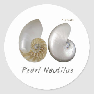 Shells Collection by FishTs.com Classic Round Sticker