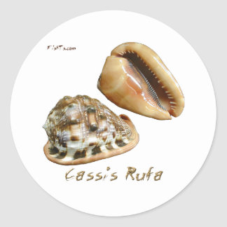 Shells Collection by FishTs.com Stickers