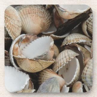 Shells Coasters
