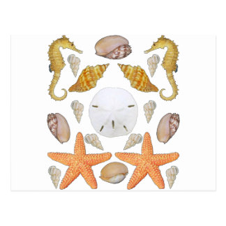 Shells Galore Postcard