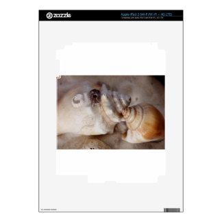 Shells iPad 3 Decal