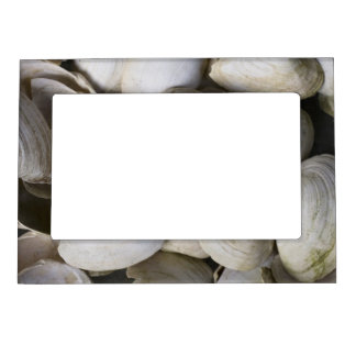 Shells Magnetic Photo Frame