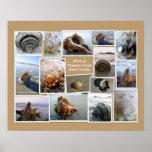 Shells of Daufuskie Island, SC Posters
