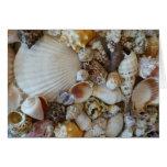 Shells Of Sanibel Greeting Card