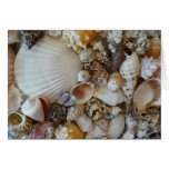 Shells Of Sanibel Greeting Cards