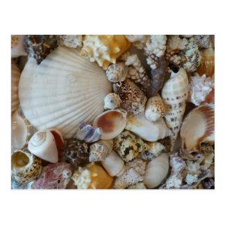 Shells Of Sanibel Post Card