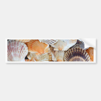 Shells of the Scallop  species  Zyclochlamys patag Bumper Sticker