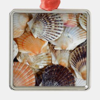 Shells of the Scallop  species  Zyclochlamys patag Metal Ornament