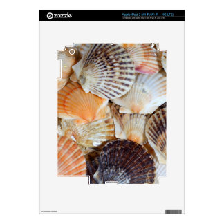Shells of the Scallop  species  Zyclochlamys patag Skin For iPad 3