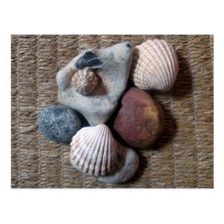 Shells on seagrass postcard