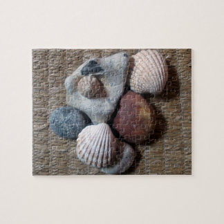 Shells on seagrass puzzles
