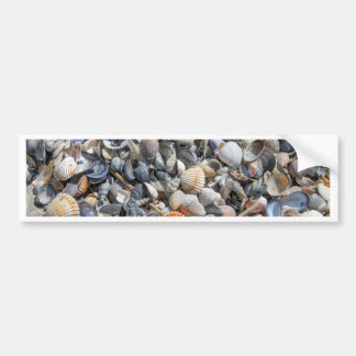 shells on the beach bumper stickers