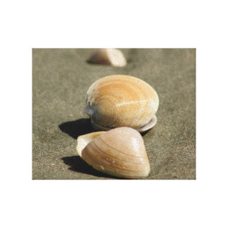 Shells on the beach gallery wrapped canvas