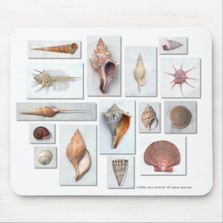 Shells on White Mouse Pad