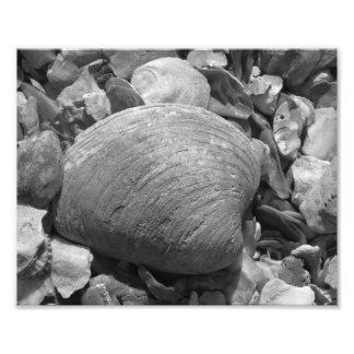 Shells Photo Print