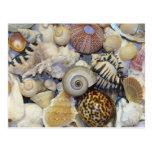 shells post card