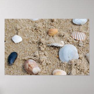 Shells - poster / print