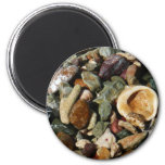 Shells, Rocks and Coral Beach Nature Theme 2 Inch Round Magnet