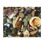 Shells, Rocks and Coral Beach Nature Theme Stretched Canvas Print